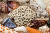 Ocean Shell Background