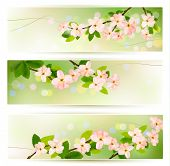 Three spring banners with blossoming tree brunch with spring flowers. Raster version of vector.