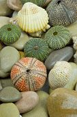 stock photo of echinoderms  - stone pebble sea shell and sea urchin - JPG