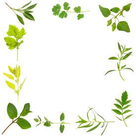 stock photo of feverfew  - Herb leaf selection forming an abstract frame of mint golden marjoram feverfew sage coriander bergamot hyssop valerian  - JPG