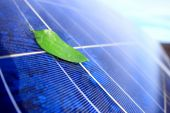 Solar Panel with leaf