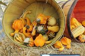 assorted winged gourds in a bucket