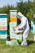 Side view of beekeeper in protective workwear carrying honeycomb frames in crate at apiary