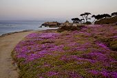 Monterey Coast California
