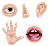stock photo of human ear  - Five senses illustrations with hand for touch eye for sight nose for smell ear for hearing and mouth for taste - JPG