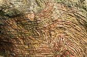 folded bands of chert, Oregon coast