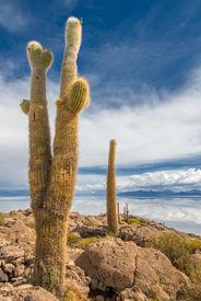 stock photo of peyote  - View of Incahuasi island Salar de Uyuni Bolivia - JPG