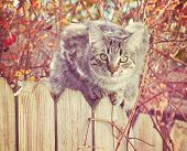 a grey cat on a fence with an autumn background