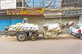Ox Cart Transportation On Early Morning In Old Delhi