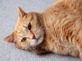 foto of catnip  - cat daring you to take away his catnip - JPG