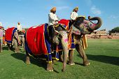 Elephant Salute with mahout