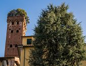 Tower Of Giunigi In Lucca, Italy