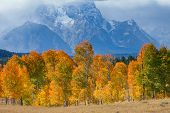 Fall At Grand Tetons