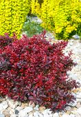 Various Bushes On Flowerbed