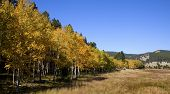 Colorado Aspen Stand And Field