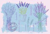 illustration of lavender