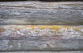 Old Log's Wall Texture