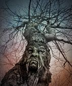 Old Scary Tree With Angry Face In Woods
