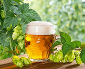 pic of bine  - still life with beer glass and hops - JPG