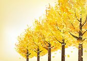 Golden Trees In Late Autumn