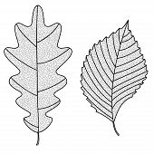 pic of elm  - Vector Collection of Leaf Silhouettes with thin veins - JPG
