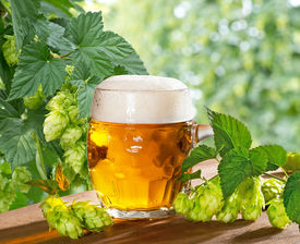 foto of bine  - still life with beer glass and hops - JPG