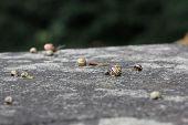 stock photo of slug  - Big group of slugs on a stone in rainy weather - JPG