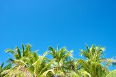 picture of boracay  - Blue sky with palm trees in Boracay Island in the Philippines - JPG