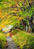 Maple Corridor, Kawaguchiko Lake, Japan
