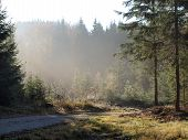 picture of bohemia  - view of the forest landscape - JPG