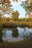 foto of birching  - Autumn landscape  - JPG