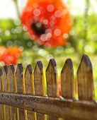 Wooden fence overlooking the autumn background