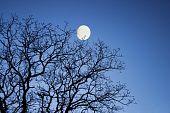 Moon through winter branches