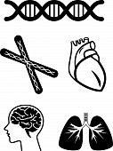 símbolos médicos de órgão humano