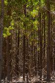 Bright Twigs