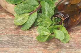 picture of mint leaf  - Fresh mint herb and Essential mint oil in a dark glass bottle with copy space for your text - JPG
