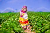 image of strawberry  - Child picking strawberries - JPG