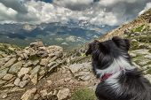 image of collie  - The back of the head of a Border Collie dog with a red and white collar looking out across the Corsican mountains with moody cloudy skies near to Lac de Nino - JPG