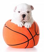 image of stuffed animals  - sports hound  - JPG