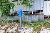 foto of spigot  - Blue fire hydrant on autumn street - JPG