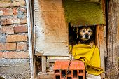 stock photo of dog-house  - Dog is peaking from his wooden dwelling house - JPG