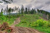 picture of cutting trees  - View of trail leading to the top of the green hill covered with pine trees - JPG