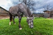 picture of  horse  - Horses in the countryside - JPG