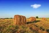 picture of hay bale  - Hay bale in the countryside - JPG