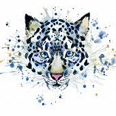 image of snow-leopard  - T - JPG