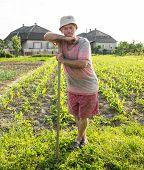 foto of hoe  - Farmer hoeing vegetable garden in springtime - JPG