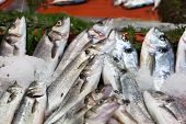 picture of saltwater fish  - Fresh - JPG