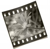 Filmstrip Flower Negative Photography