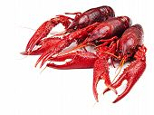 stock photo of crawdads  - red boiled crawfishes over the white background - JPG