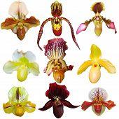 Orchid Set